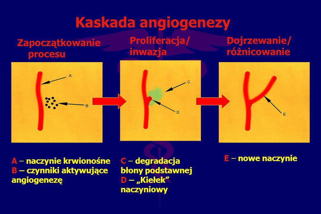 Kaskada angiogenezy Proliferacja/ inwazja Dojrzewanie/ różnicowanie