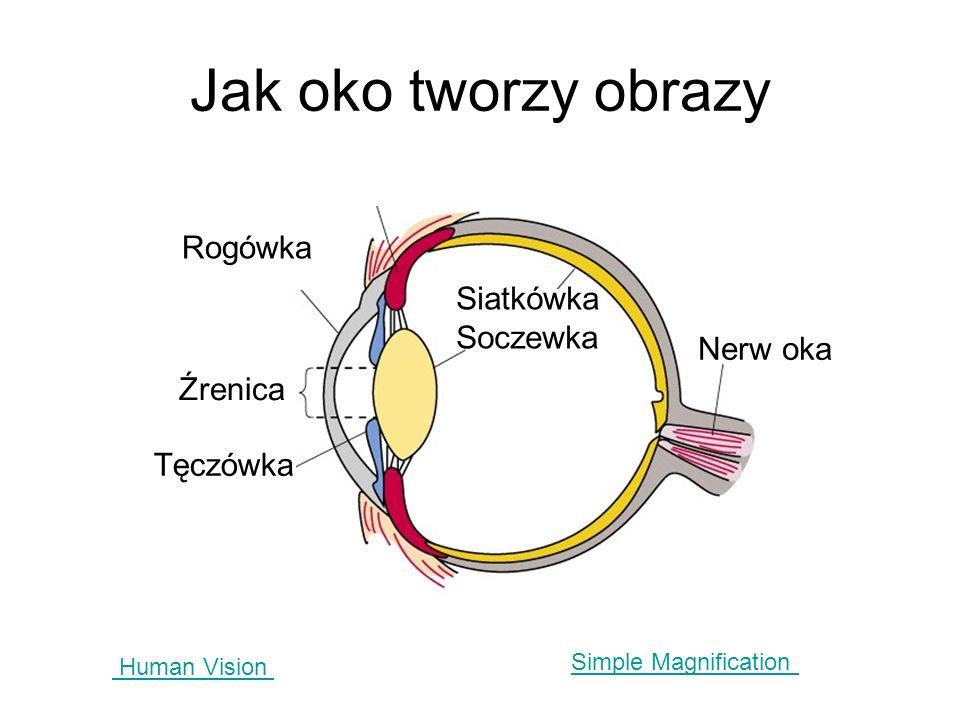 Jak oko tworzy obrazy Rogówka Siatkówka Soczewka Nerw oka Źrenica