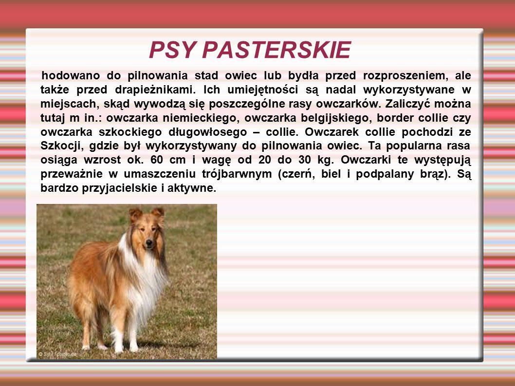 PSY PASTERSKIE