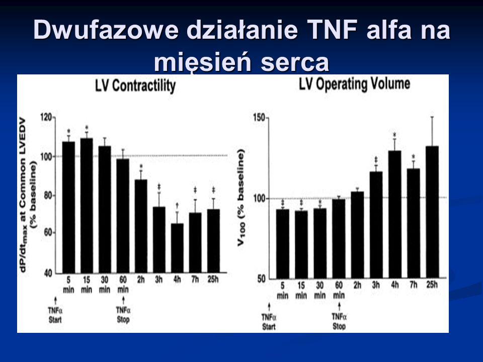 Dwufazowe działanie TNF alfa na mięsień serca