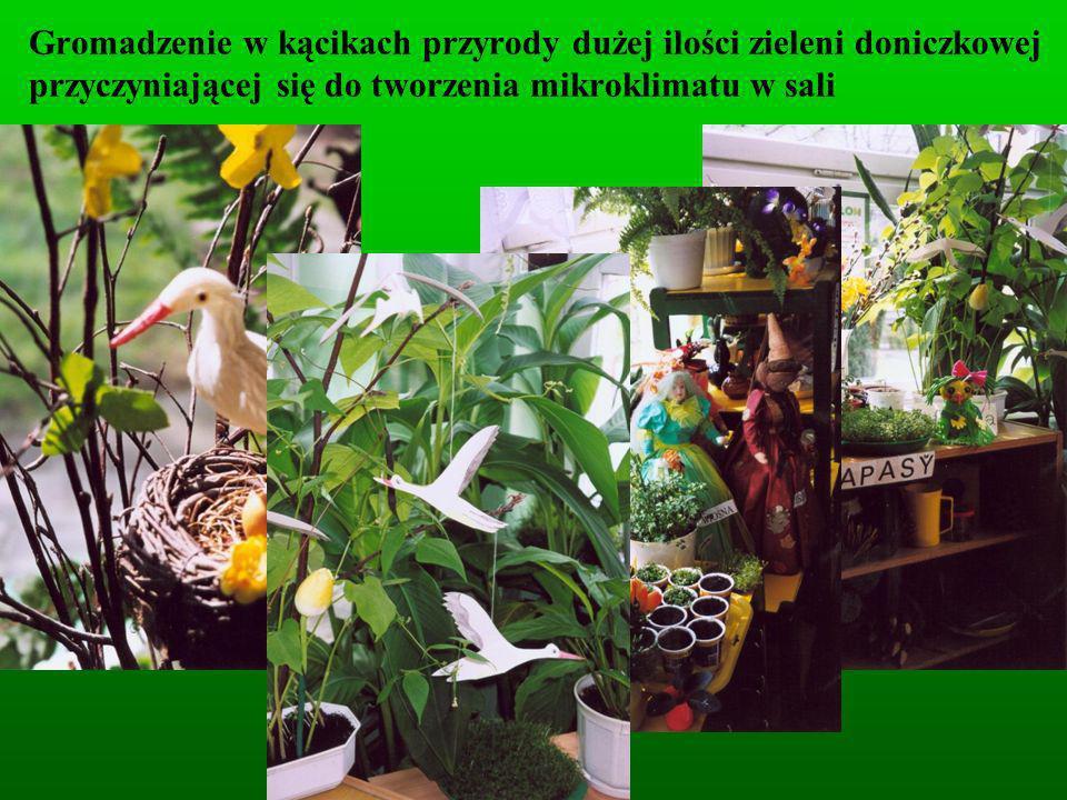 Gromadzenie w kącikach przyrody dużej ilości zieleni doniczkowej przyczyniającej się do tworzenia mikroklimatu w sali