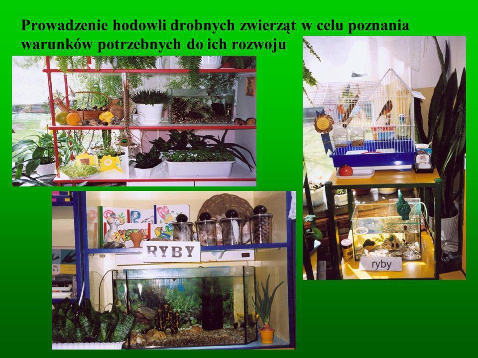 Prowadzenie hodowli drobnych zwierząt w celu poznania warunków potrzebnych do ich rozwoju