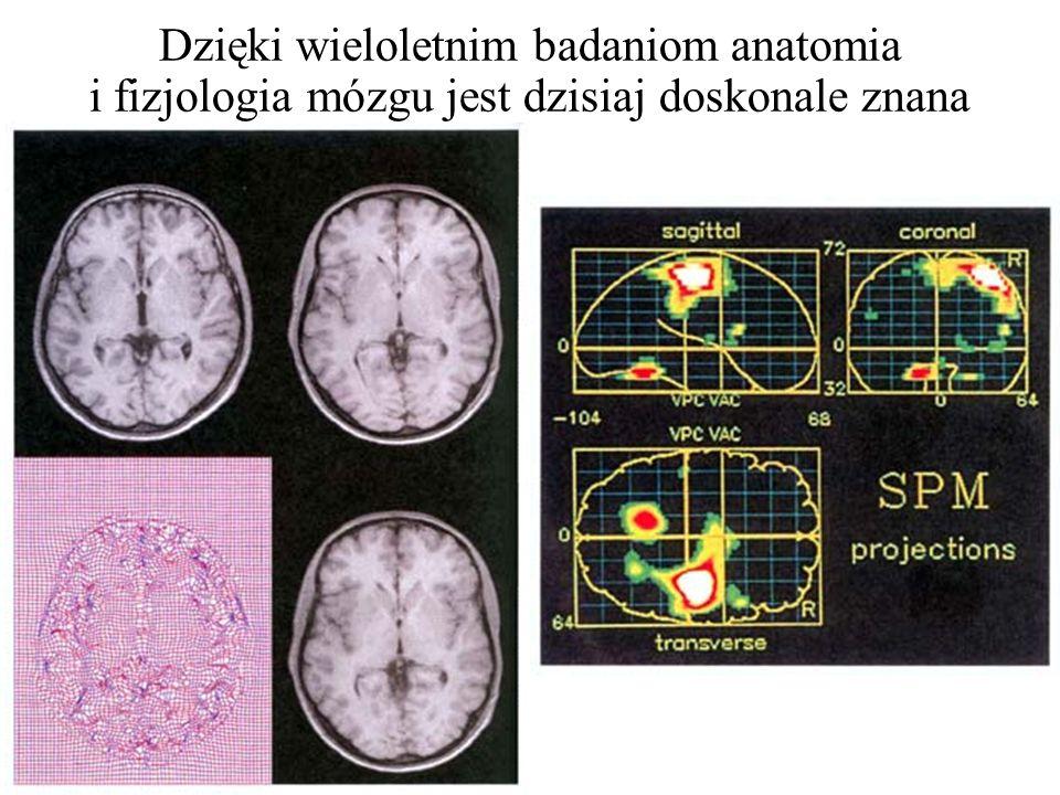 Dzięki wieloletnim badaniom anatomia i fizjologia mózgu jest dzisiaj doskonale znana