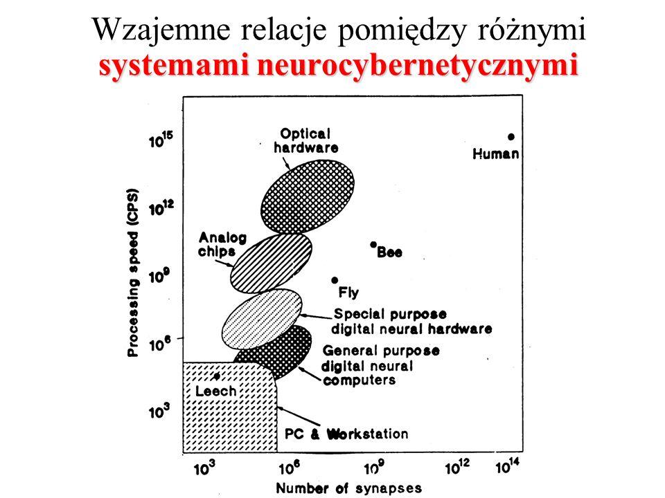 Wzajemne relacje pomiędzy różnymi systemami neurocybernetycznymi