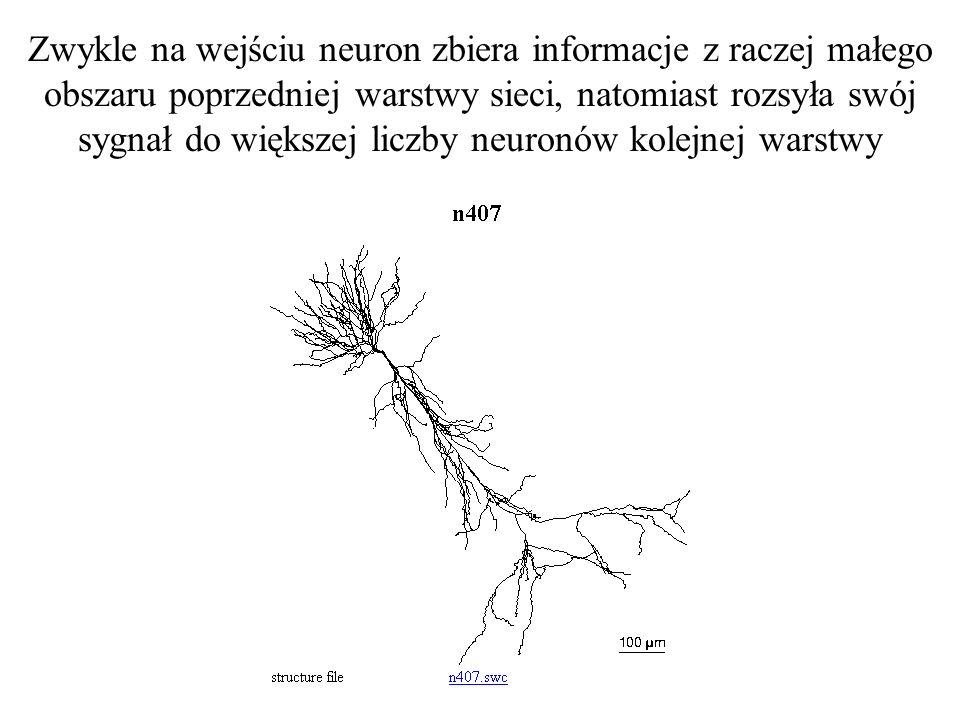 Zwykle na wejściu neuron zbiera informacje z raczej małego obszaru poprzedniej warstwy sieci, natomiast rozsyła swój sygnał do większej liczby neuronów kolejnej warstwy