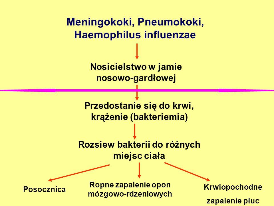 Meningokoki, Pneumokoki, Haemophilus influenzae