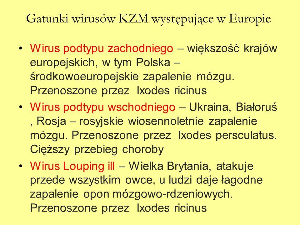 Gatunki wirusów KZM występujące w Europie