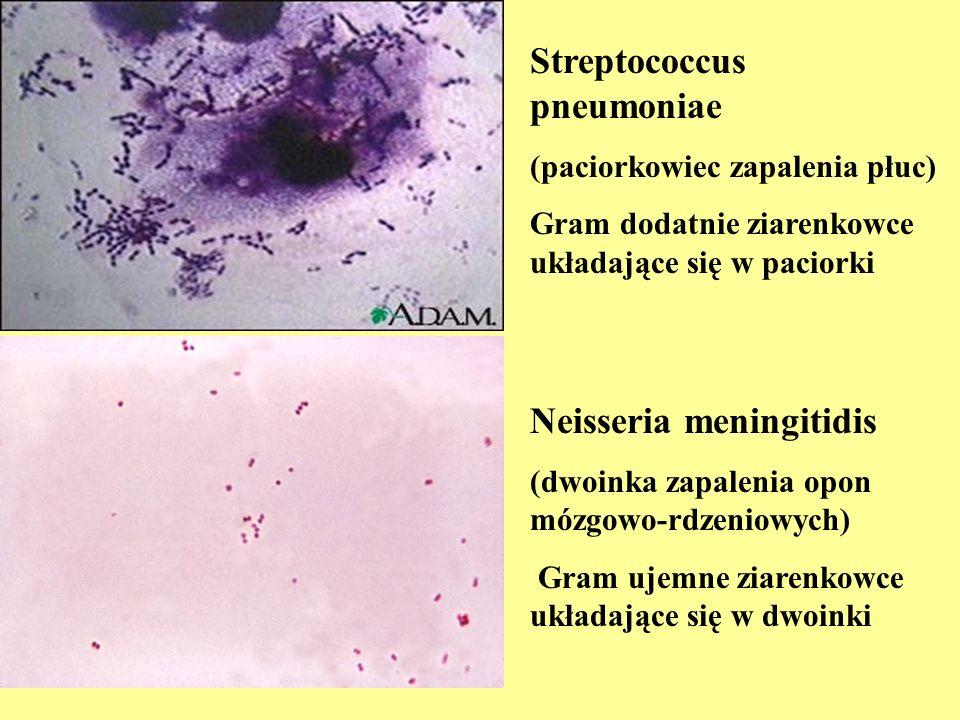 Streptococcus pneumoniae