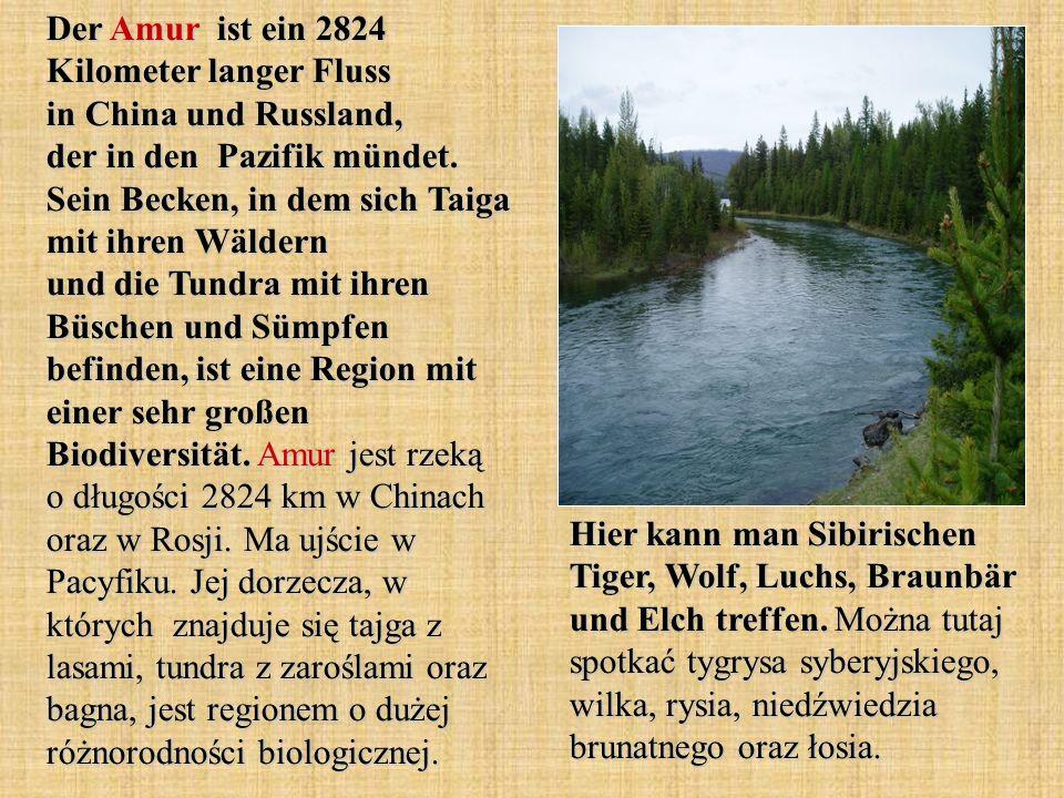 Der Amur ist ein 2824 Kilometer langer Fluss in China und Russland, der in den Pazifik mündet. Sein Becken, in dem sich Taiga mit ihren Wäldern und die Tundra mit ihren Büschen und Sümpfen befinden, ist eine Region mit einer sehr großen Biodiversität. Amur jest rzeką o długości 2824 km w Chinach oraz w Rosji. Ma ujście w Pacyfiku. Jej dorzecza, w których znajduje się tajga z lasami, tundra z zaroślami oraz bagna, jest regionem o dużej różnorodności biologicznej.