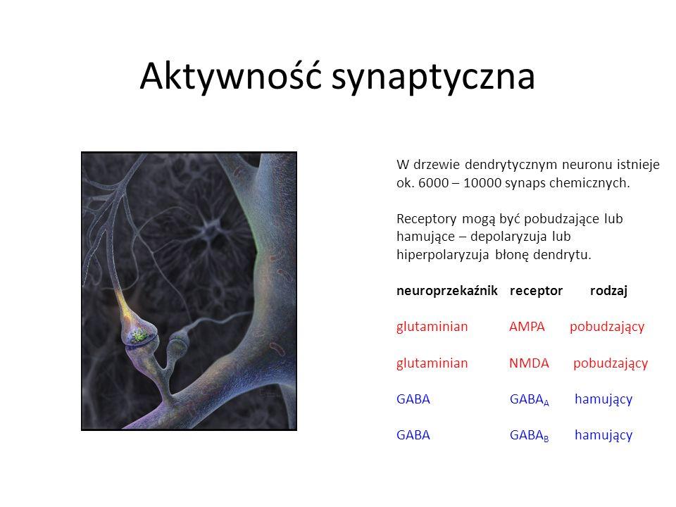 Aktywność synaptyczna