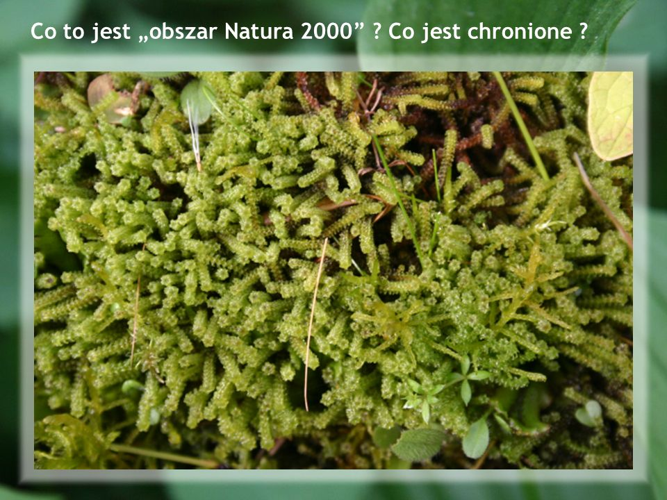 """Co to jest """"obszar Natura 2000 Co jest chronione"""