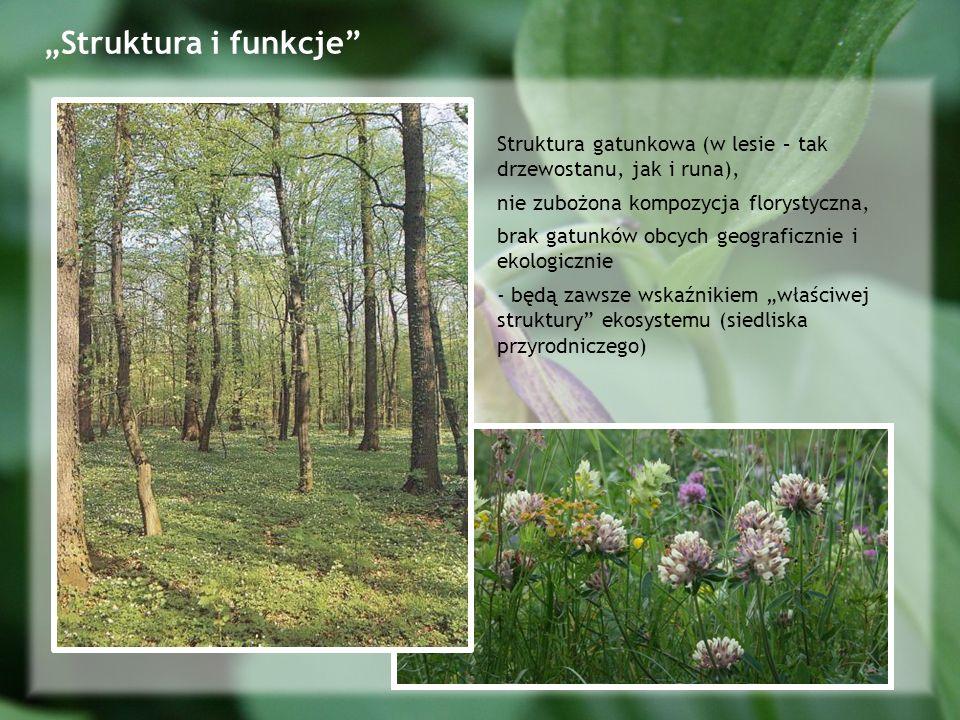"""""""Struktura i funkcje Struktura gatunkowa (w lesie – tak drzewostanu, jak i runa), nie zubożona kompozycja florystyczna,"""