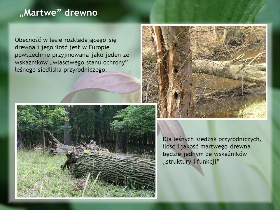 """Martwe drewno"