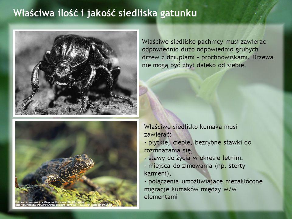 Właściwa ilość i jakość siedliska gatunku