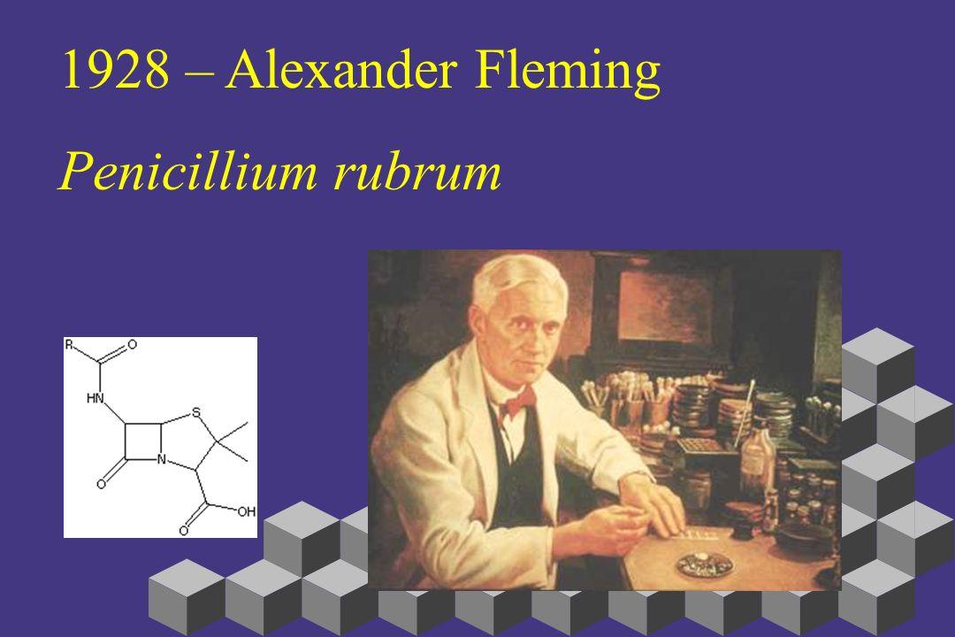 1928 – Alexander Fleming Penicillium rubrum