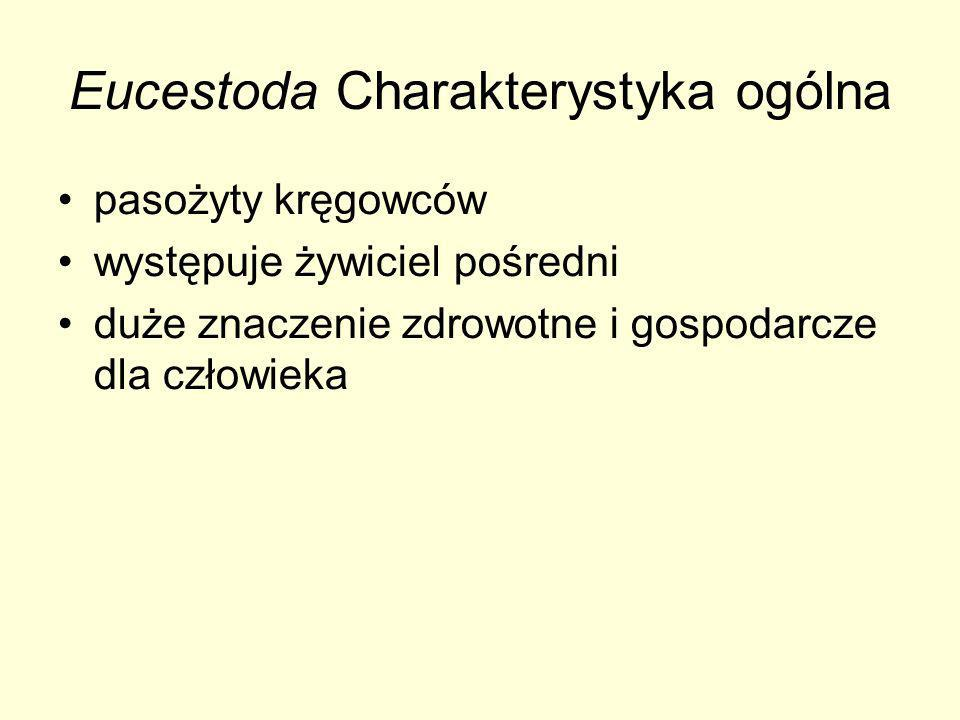 Eucestoda Charakterystyka ogólna