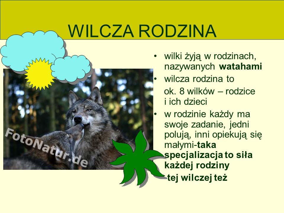 WILCZA RODZINA wilki żyją w rodzinach, nazywanych watahami