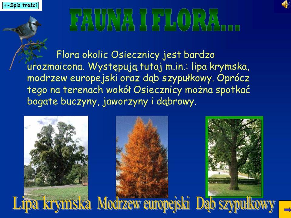 FAUNA I FLORA... Lipa krymska Modrzew europejski Dąb szypułkowy