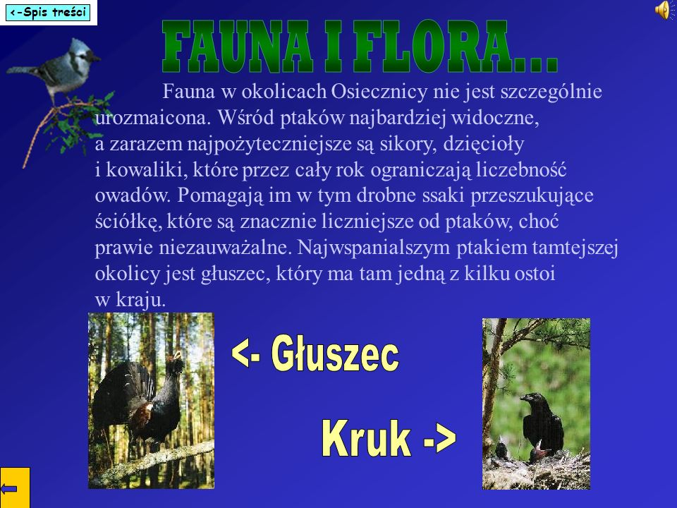 FAUNA I FLORA... <- Głuszec Kruk ->