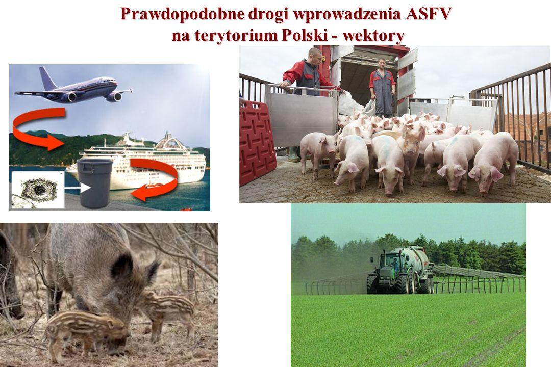 Prawdopodobne drogi wprowadzenia ASFV na terytorium Polski - wektory