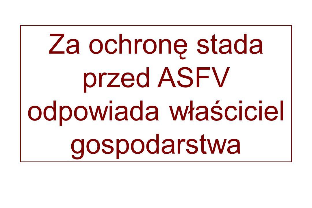 Za ochronę stada przed ASFV odpowiada właściciel gospodarstwa