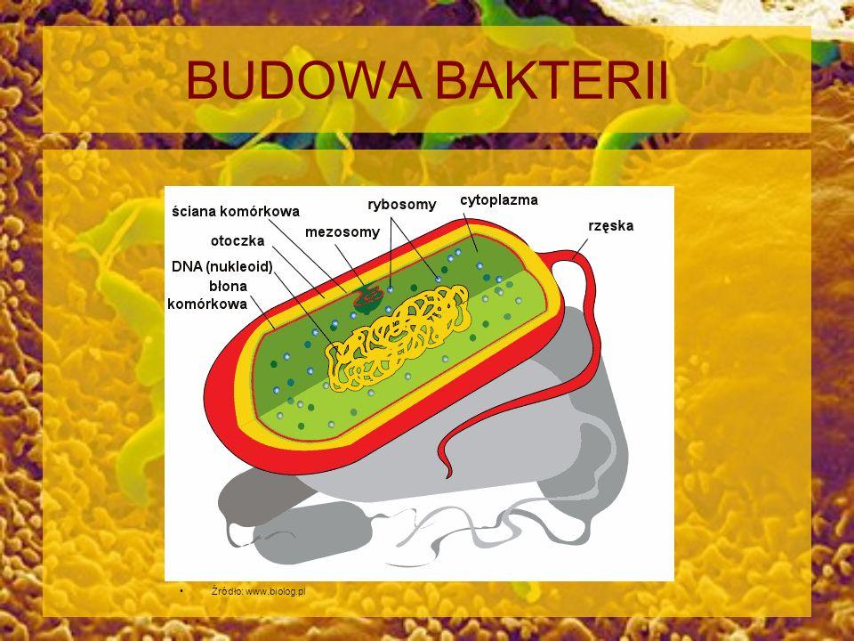 BUDOWA BAKTERII Źródło: www.biolog.pl