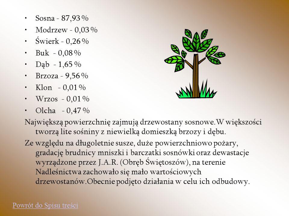 Sosna - 87,93 % Modrzew - 0,03 % Świerk - 0,26 % Buk - 0,08 %