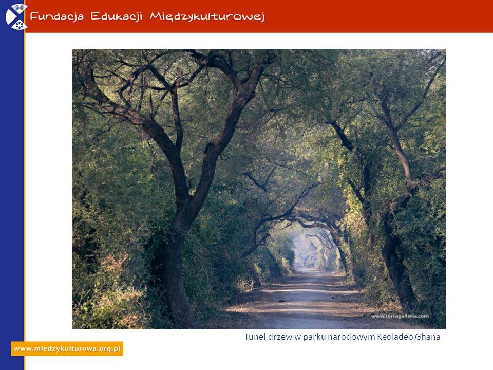 Tunel drzew w parku narodowym Keoladeo Ghana