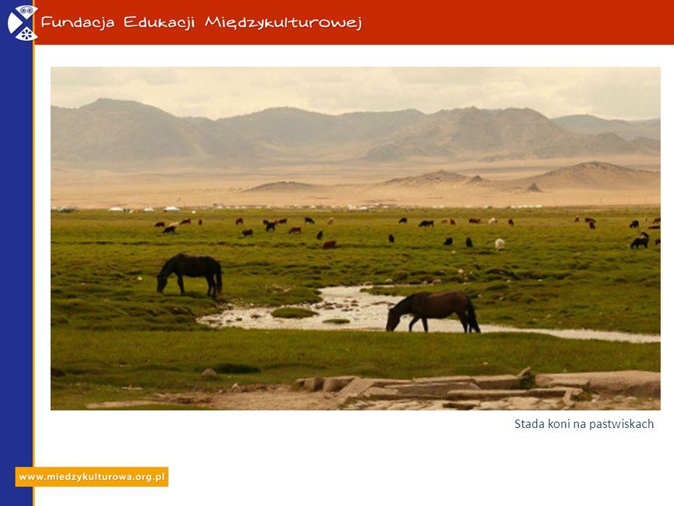 Stada koni na pastwiskach