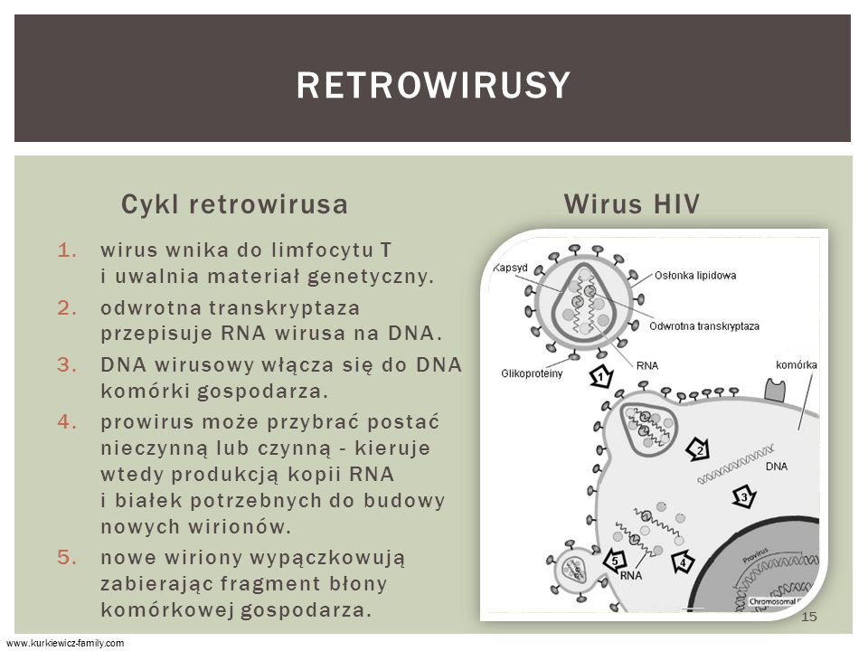 retrowirusy Cykl retrowirusa Wirus HIV