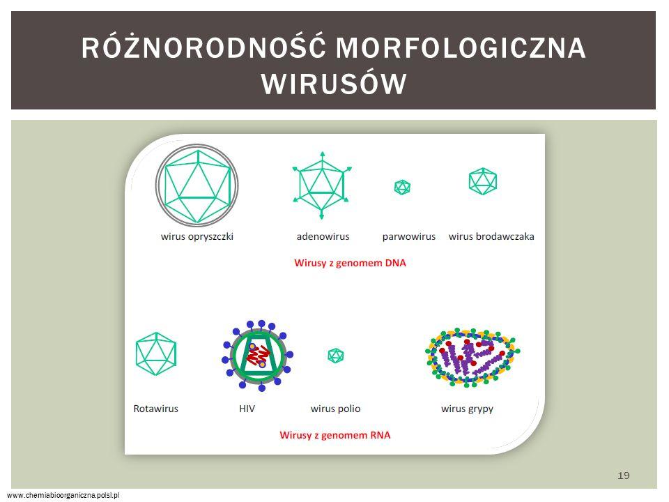 Różnorodność morfologiczna wirusów