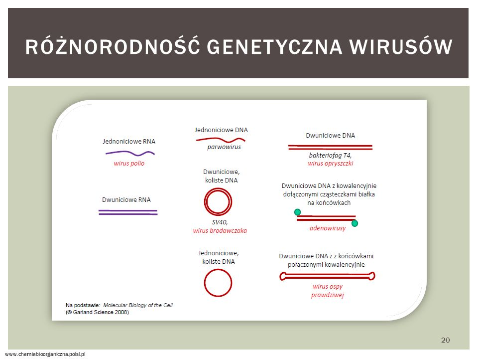 Różnorodność genetyczna wirusów