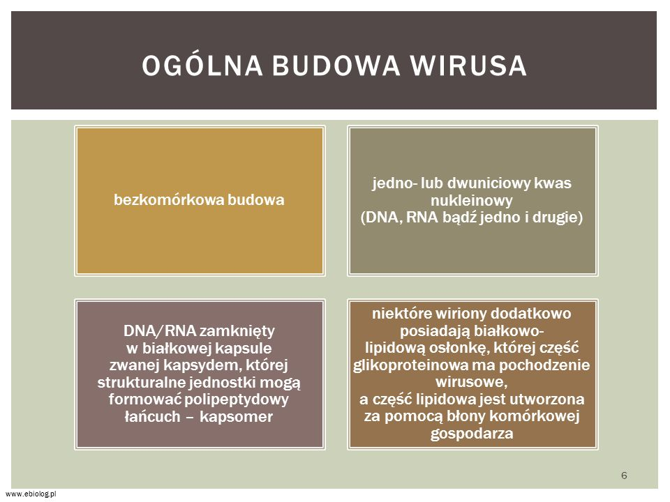 jedno- lub dwuniciowy kwas nukleinowy (DNA, RNA bądź jedno i drugie)