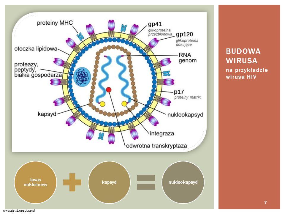 Budowa wirusa na przykładzie wirusa HIV kwas nukleinowy kapsyd