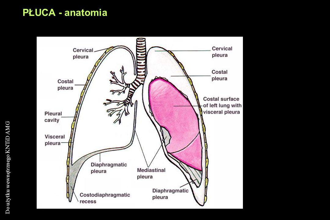 PŁUCA - anatomia