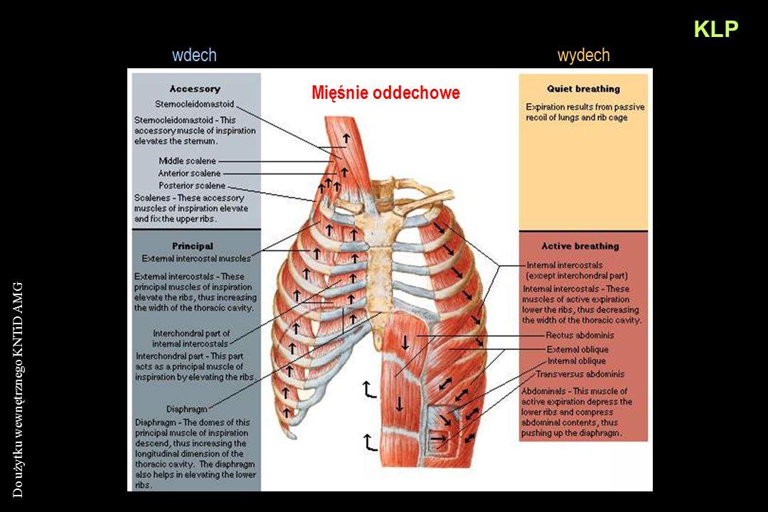 KLP wdech wydech Mięśnie oddechowe