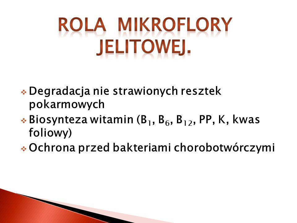 ROLA MIKROFLORY JELITOWEJ.