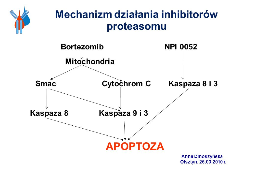 Mechanizm działania inhibitorów proteasomu