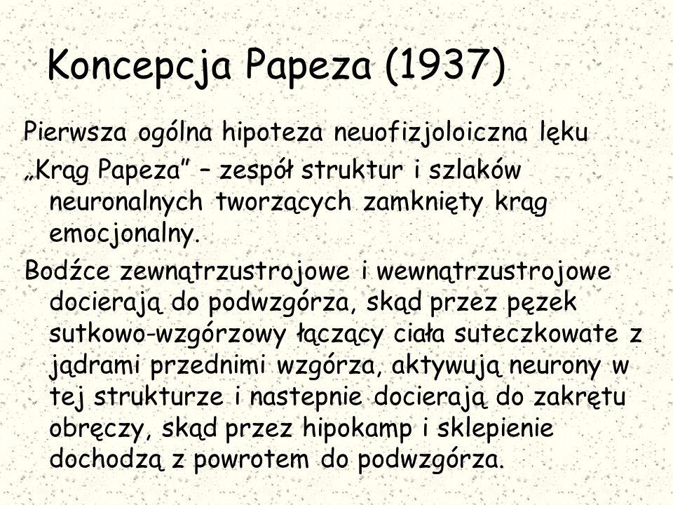 Koncepcja Papeza (1937) Pierwsza ogólna hipoteza neuofizjoloiczna lęku
