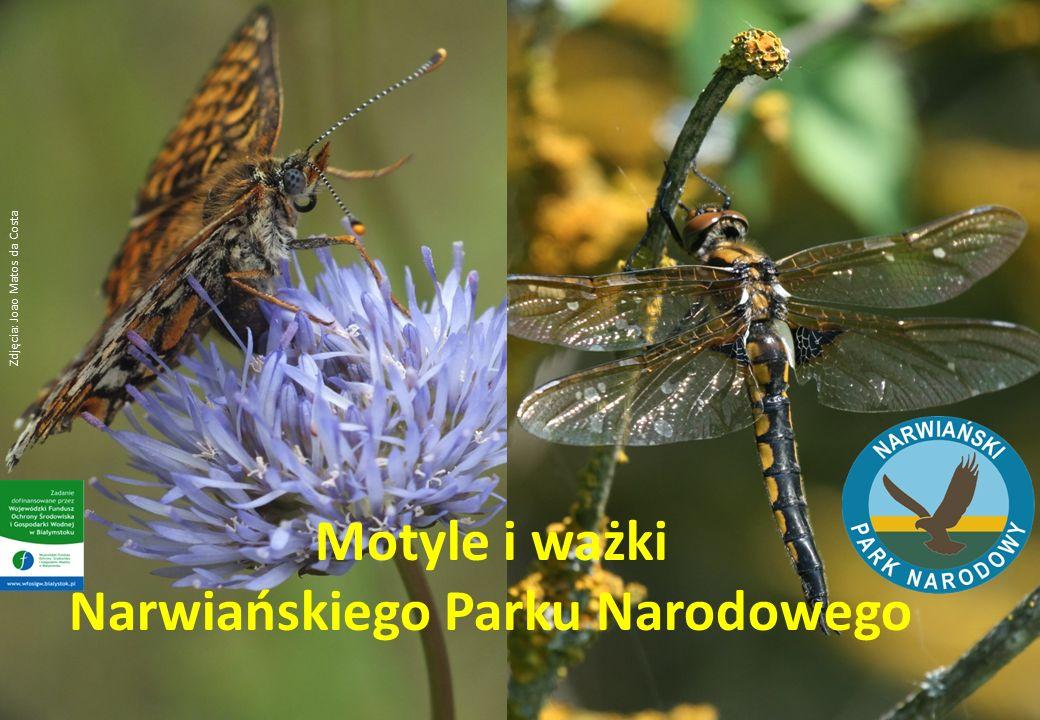 Motyle i ważki Narwiańskiego Parku Narodowego