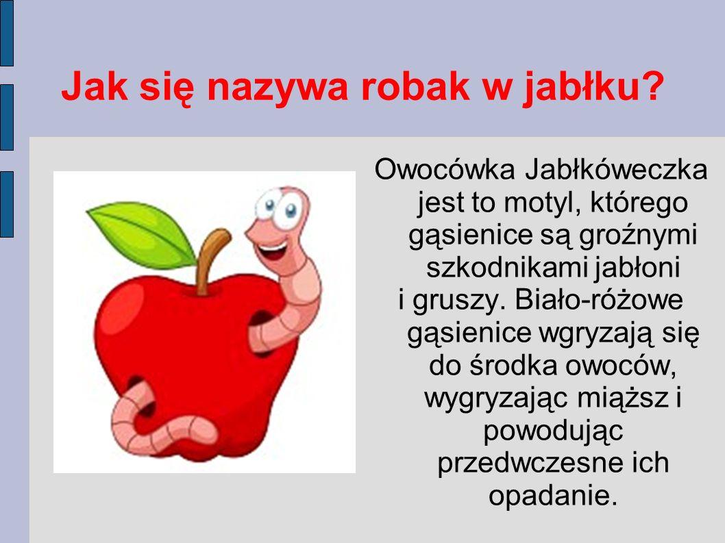 Jak się nazywa robak w jabłku