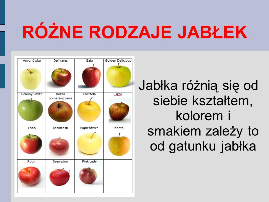 RÓŻNE RODZAJE JABŁEK Jabłka różnią się od siebie kształtem, kolorem i smakiem zależy to od gatunku jabłka.
