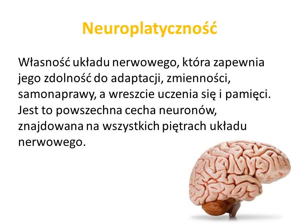 Neuroplatyczność