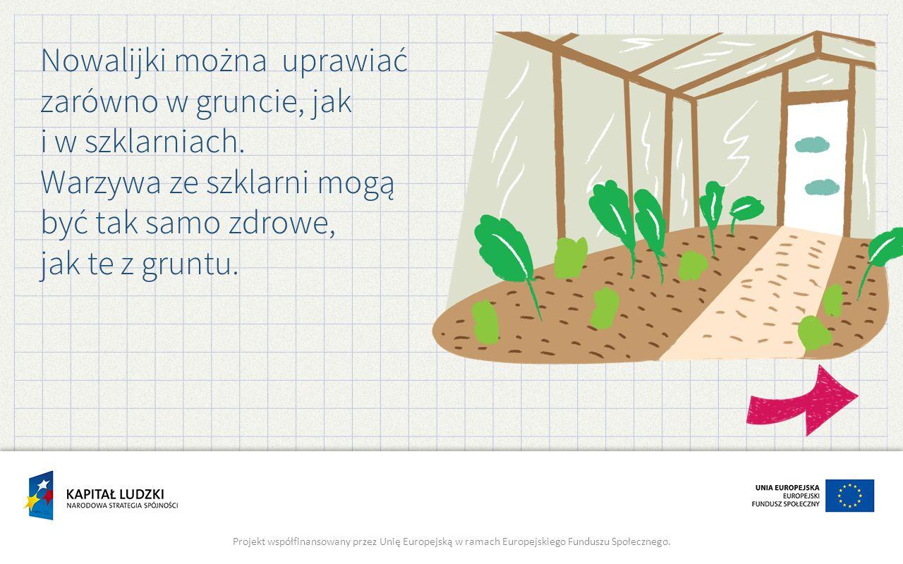 Nowalijki można uprawiać zarówno w gruncie, jak i w szklarniach.