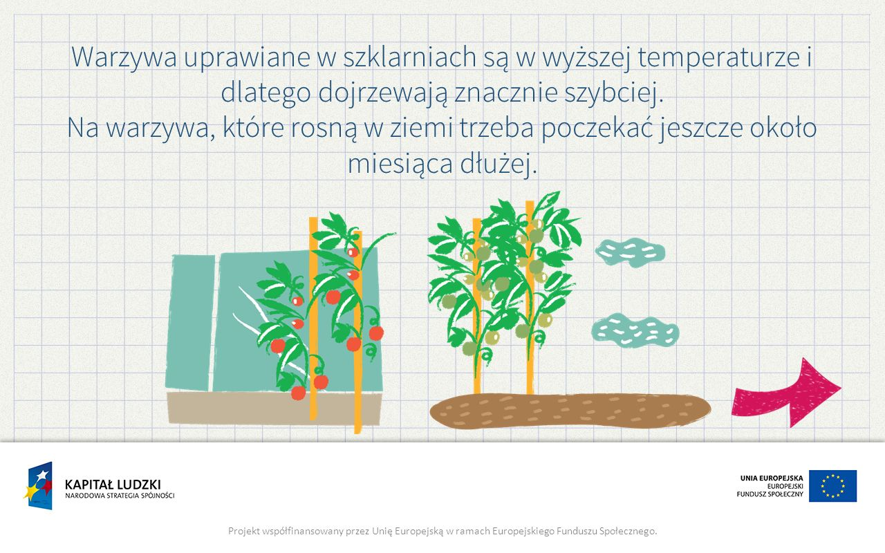 Warzywa uprawiane w szklarniach są w wyższej temperaturze i dlatego dojrzewają znacznie szybciej.