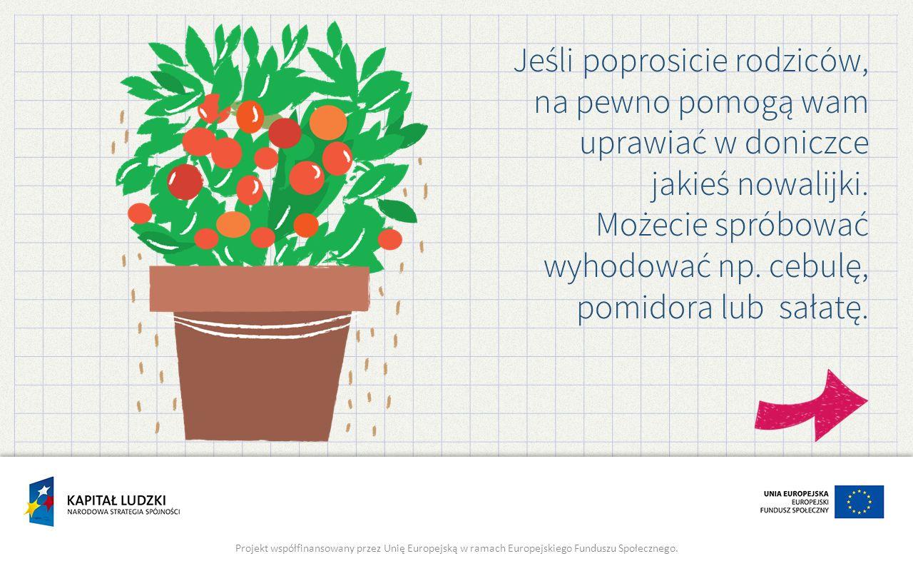 Jeśli poprosicie rodziców, na pewno pomogą wam uprawiać w doniczce jakieś nowalijki. Możecie spróbować wyhodować np. cebulę, pomidora lub sałatę.