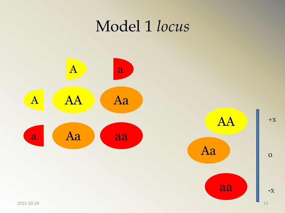 Model 1 locus A a AA Aa A AA +x Aa aa a Aa aa -x 2015-10-29
