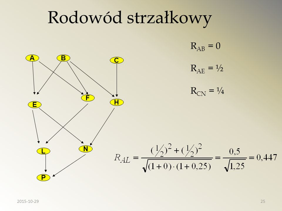 Rodowód strzałkowy RAB = 0 RAE = ½ RCN = ¼ A B C F H E N L P