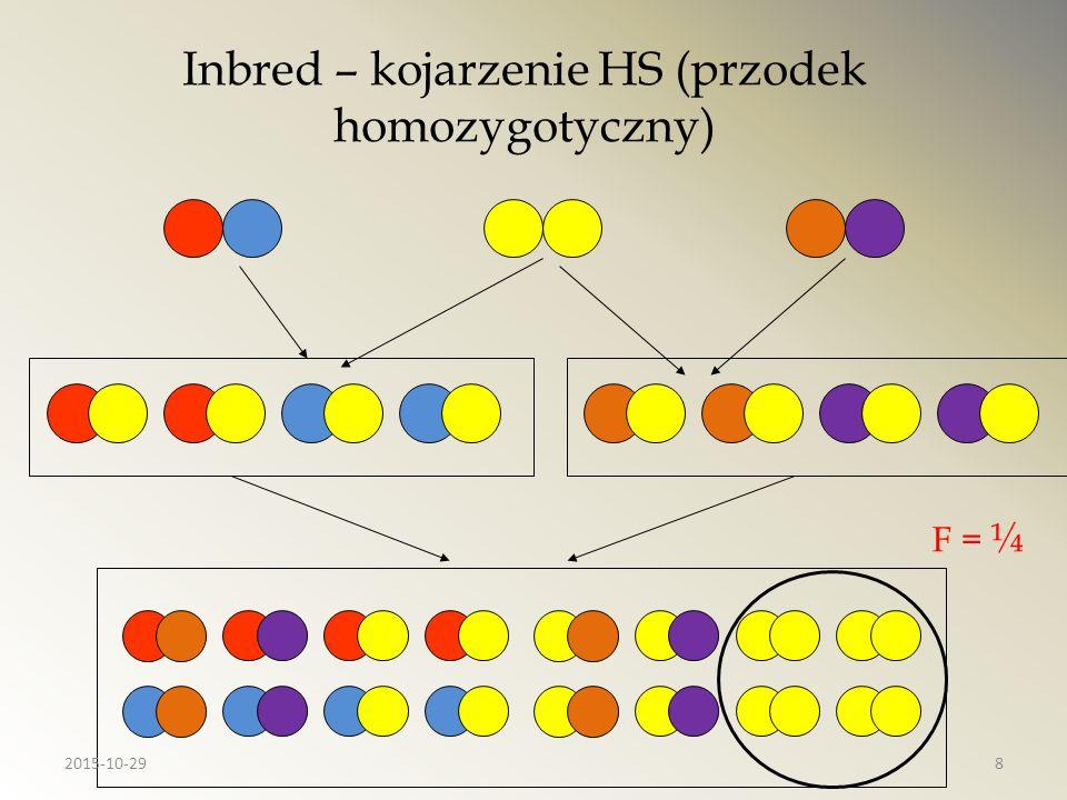 Inbred – kojarzenie HS (przodek homozygotyczny)