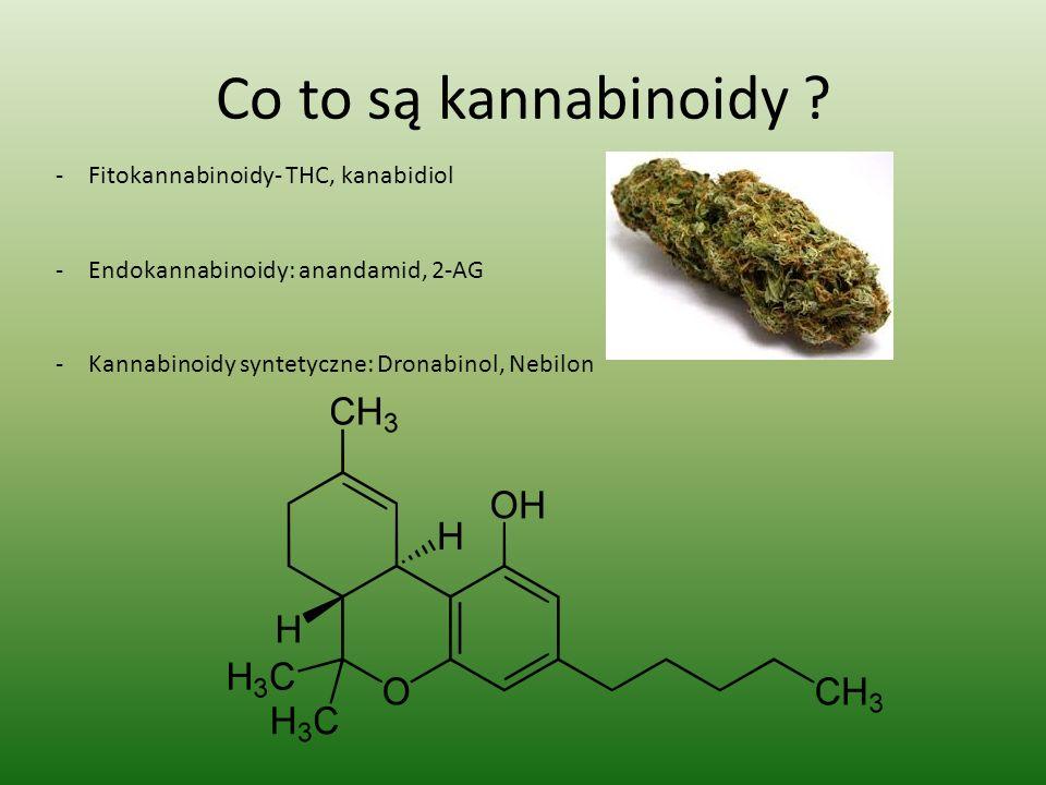 Co to są kannabinoidy Fitokannabinoidy- THC, kanabidiol